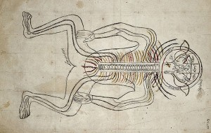IMAGE BY 14TH-CENTURY PERSIAN ANATOMIST MANSUR IBN MUHAMMAD ILYAS. TREATISE ON THE ANATOMY OF THE HUMAN NERVOUS SYSTEM